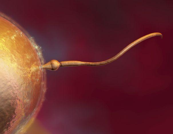 podvizhnost-spermatozoidov-uvelichenie