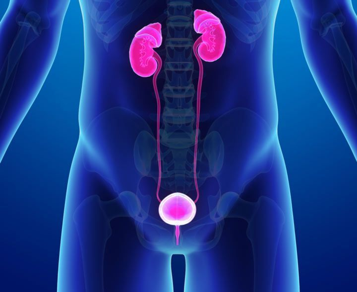 illustration of urinary tract infection