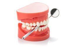 A dental model with a dental mirror
