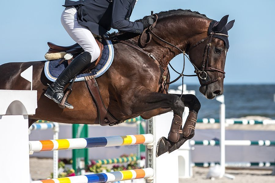 Show horse jumping over hurdle