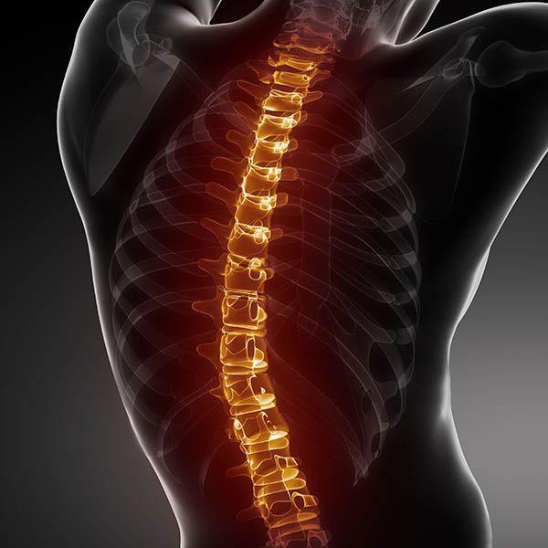 injured spinal cord