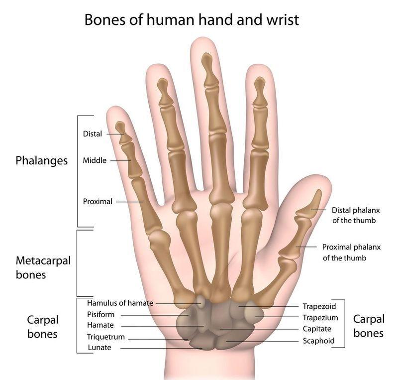 Hand Fractures Austin Tx Gregg A Vagner Md