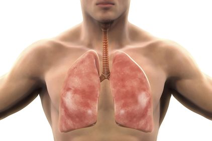 Digital illustration showing the anatomical location of the lungs
