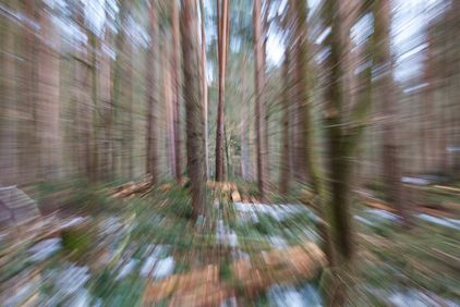 Blurry picture of a forest