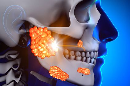 Digital illustration showing the parotid glands