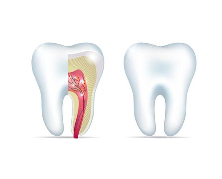 Illustration of a healthy tooth root