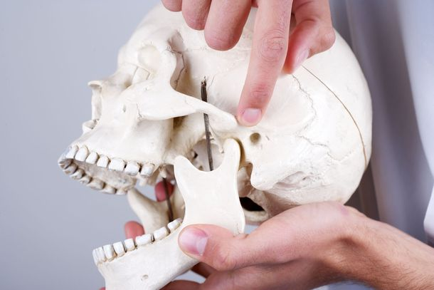 Man holding model skull and pointing to jaw joint