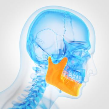 3D X-ray graphic highlighting the mandible for general dentistry procedure