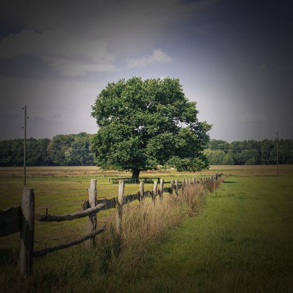 A tree and a fence in the countryside.
