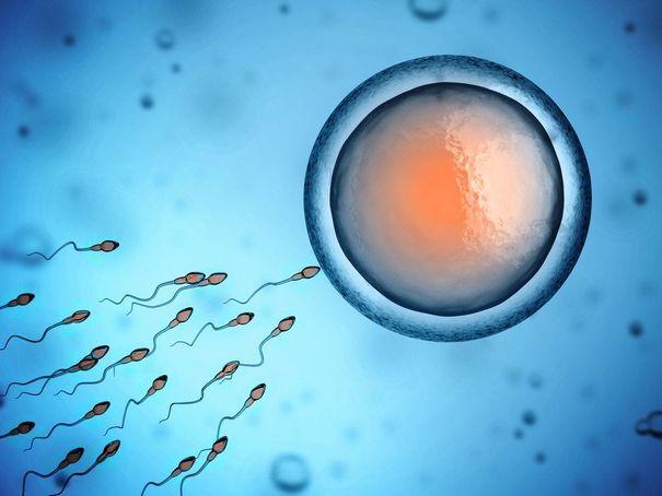 Image of sperm reaching an egg