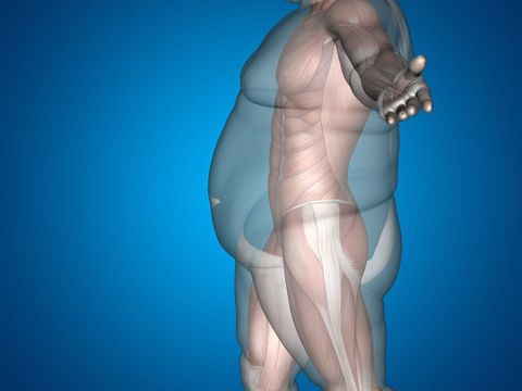 Digital illustration showing the underlying muscular structure of an obese person
