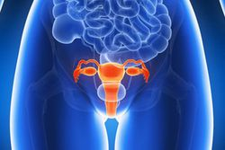 3D illustration of a woman's abdomen and uterus
