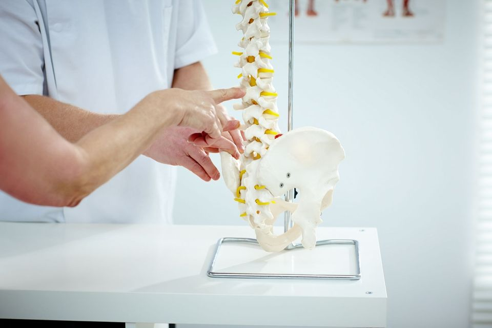 Photo of a model of a spine