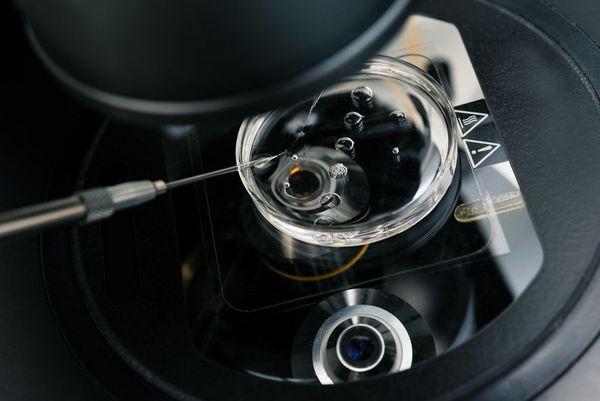 embryo testing