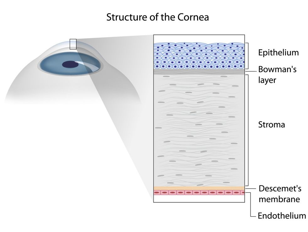Diagram of the layers that make up the cornea